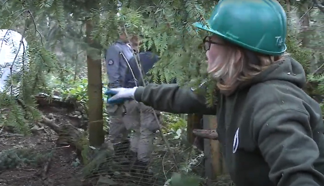Team Leader in hardhat working in forest restoration project